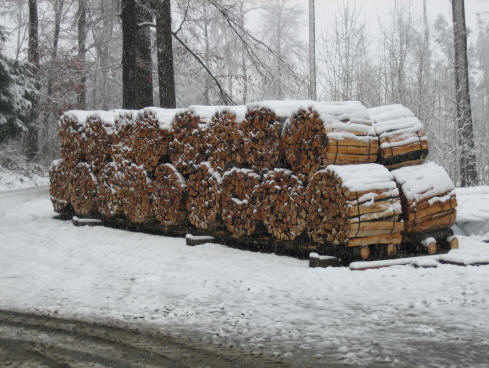 Ster brennholz